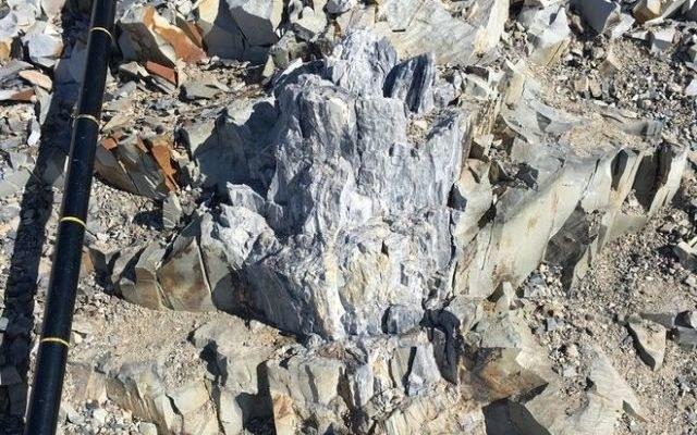 Skamieniałe drzewo odnalezione na Antarktydzie /materiały prasowe