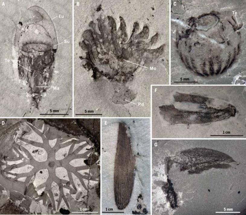 Skamieniałości z Qingjiang /materiały prasowe