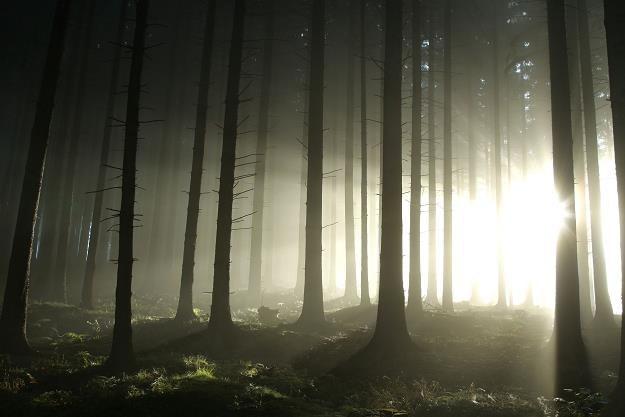 Skarbówka szuka zaległych pieniędzy w... lasach /©123RF/PICSEL