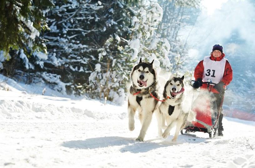 Skijoring /123RF/PICSEL