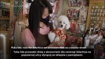 Sklep w Tokio sprzedaje olimpijskie kimona dla zwierząt. Wideo