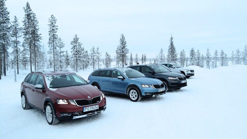 Skody w Laponii /INTERIA.PL