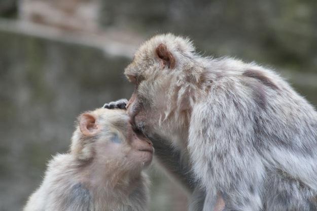 Skoro czytamy w myślach małp, to kiedy przyjdzie kolej na ludzi? /123RF/PICSEL