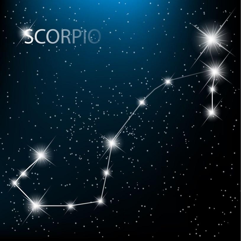 Skorpion /123RF/PICSEL