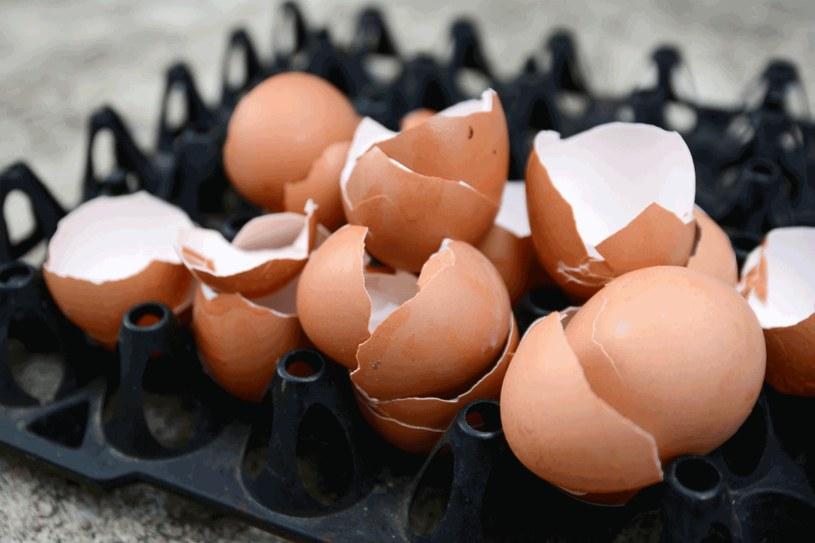 Skorupki z jaj to cenne źródło wapnia /123RF/PICSEL
