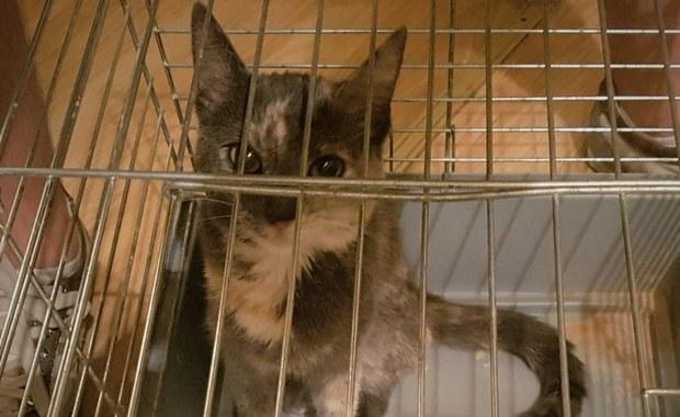 Skradziony kot wrócił do właścicielki. Pomogli policjanci