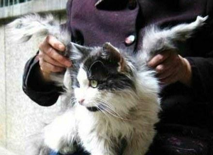 Skrzydlaty kot z miasta Xianyang /MWMedia