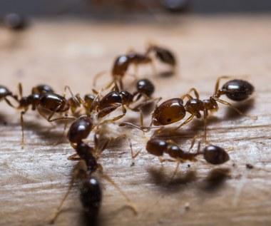 Skuteczne sposoby na pozbycie się mrówek
