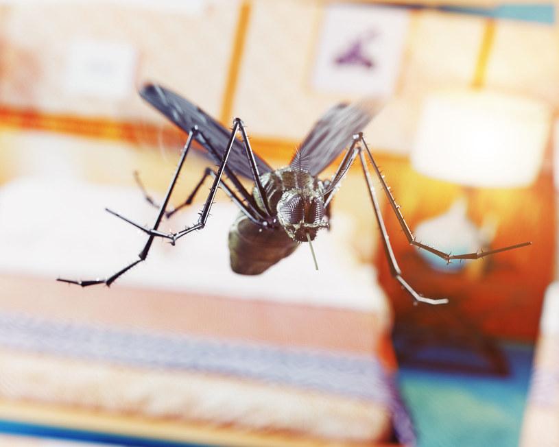 Skuteczny sposób na komary to także moskitiera - fizyczna bariera, której nie przekroczą /Picsel /123RF/PICSEL