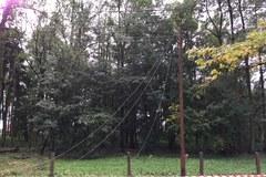 Skutki orkanu w okolicach Suchoczasów