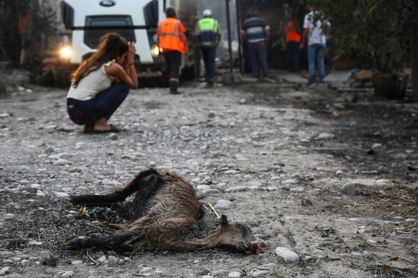 Skutki pożaru w okolicy Manavgat /KAAN SOYTURK /Agencja FORUM