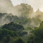 Ślady lasu tropikalnego w Norwegii