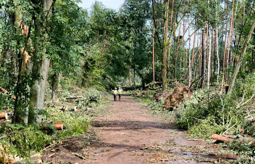 Śląsk: Trąba powietrzna zniszczyła las