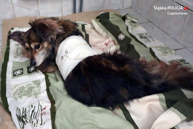 Śląskie: 58-latek aresztowany za skatowanie psa /Policja