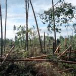 Śląskie: Uporządkowanie lasów po trąbie powietrznej może potrwać nawet półtora roku