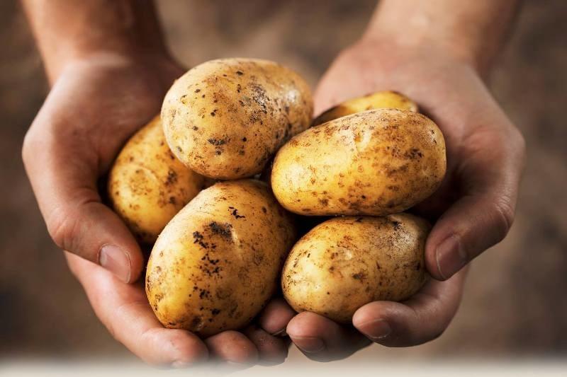 Słodkie ziemniaki właściwości /© Photogenica