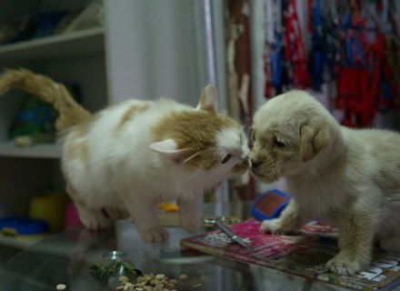 Słodkie zwierzaki bywają przyczyną konfliktów /Getty Images/Flash Press Media