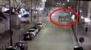 Słoń na ulicach Poznania? Opublikowano nagranie