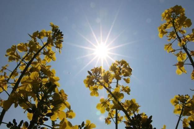 Słońce może być dla nas zagrożeniem i nie mówimy tylko o naszej skórze /AFP