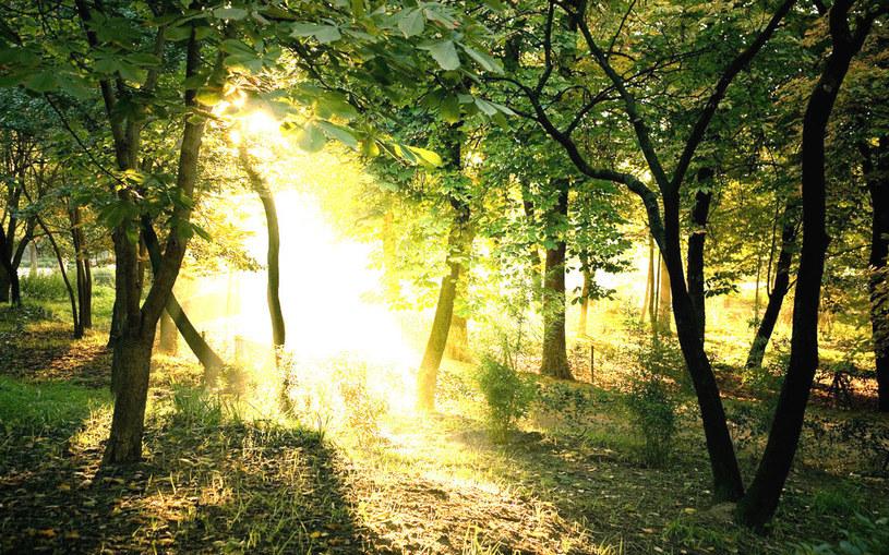słońce w lesie /© Photogenica