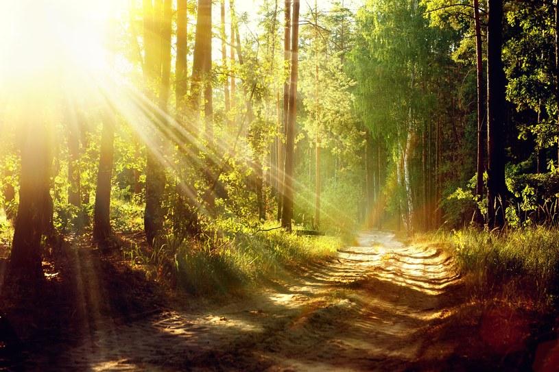 Słoneczny, jesienny dzień... /123RF/PICSEL