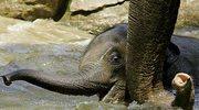 Słoniarnia dla nosorożca