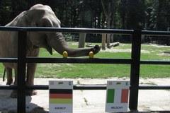 Słonica Citta stawia na Włochów