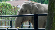 Słonica prawdę wam powie