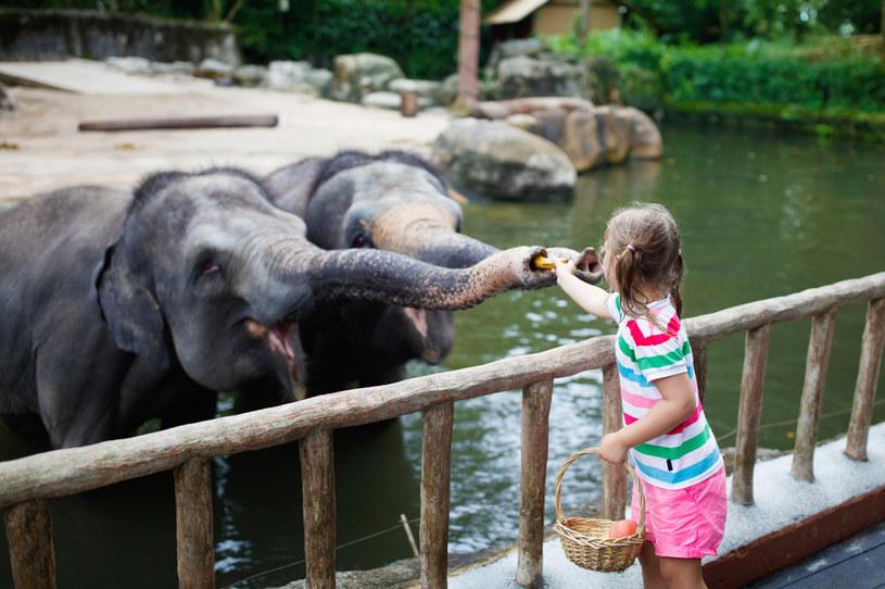 Słonie kojarzą się na jednoznacznie, ale pozory czasem mylą /123RF/PICSEL