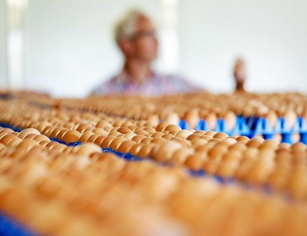 Słowacja: Wykryto holenderskie jaja skażone fipronilem /AFP
