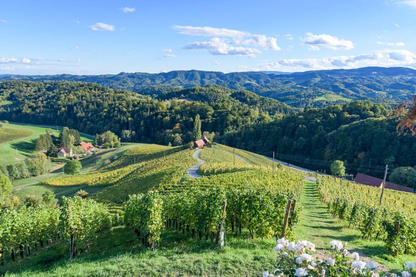 Słowenia to kraina wina, oliwek i urwistych, alpejskich turni /materiały prasowe