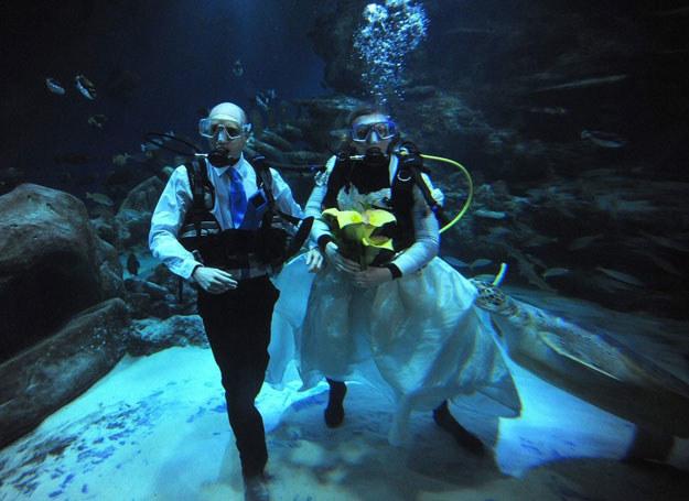 Ślub podwodny /Tony Kyriacou / Rex Features /East News