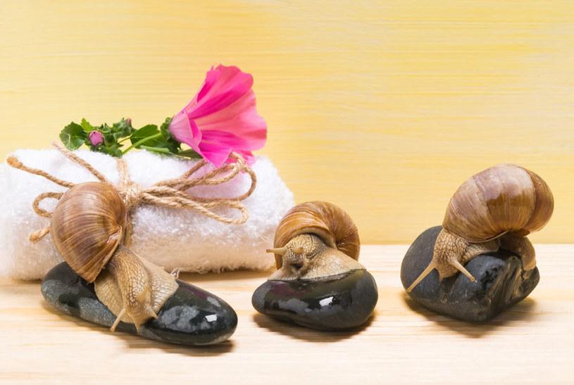 Śluz ślimaków /©123RF/PICSEL