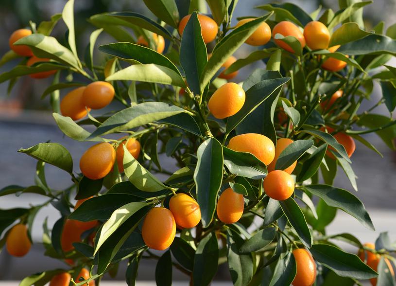 Smak owoców może rozczarować /123RF/PICSEL