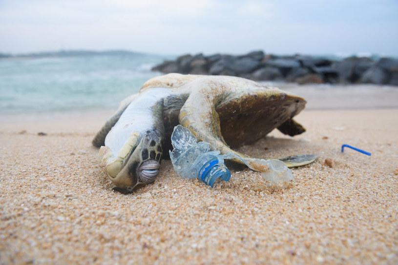 Śmieci stanowią śmiertelne zagrożenie dla dziko żyjących zwierząt /123RF/PICSEL