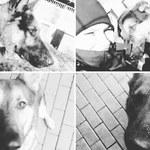 Śmierć 6 psów. Policja będzie miała problem z odtworzeniem laboratorium