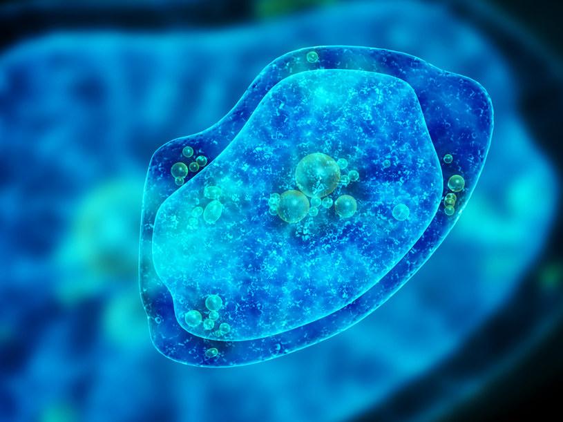 Śmiercionośna ameba pasożytuje w niechlorowanych zbiornikach wodnych /123RF/PICSEL