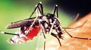 Śmiercionośne komary zagrażają Europie
