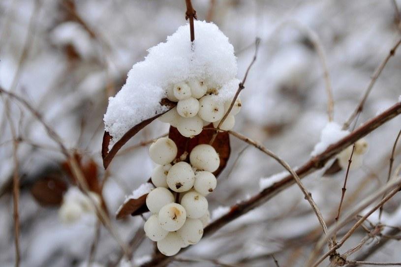 Śniegu coraz mniej /Piotr Kamionka /Reporter