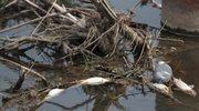 Śnięte ryby w Białej Tarnowskiej