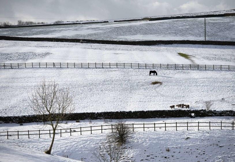 Śnieżna pogoda na razie nie opuści Wielkiej Brytanii /AFP