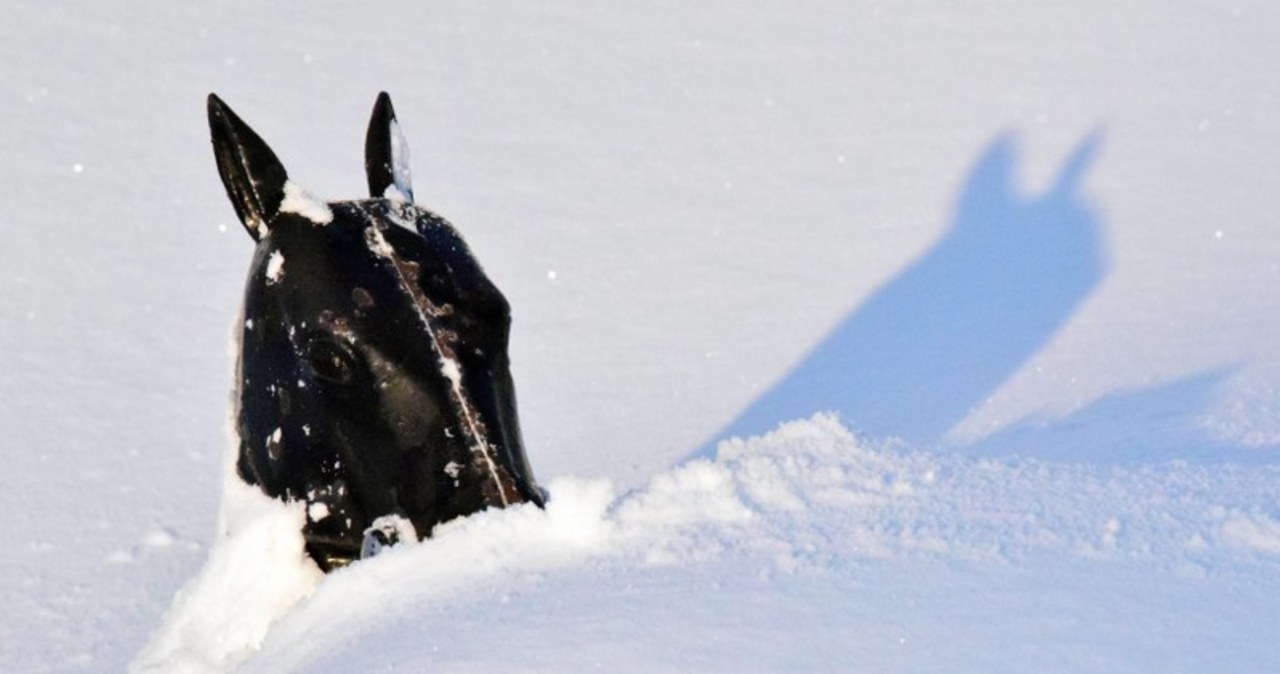 Śnieżyce w Buffalo (PAP/EPA)