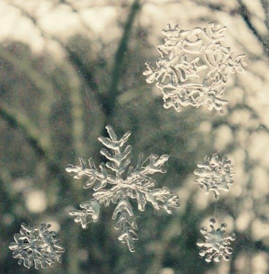 śnieżynki /© Photogenica