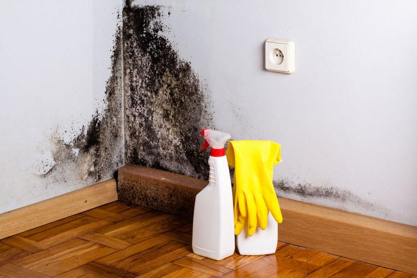 Sól pomoże pozbyć się pleśni ze ścian /123RF/PICSEL