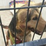 Sołtys ciągnęła psa za autem. Usłyszy zarzut znęcania się