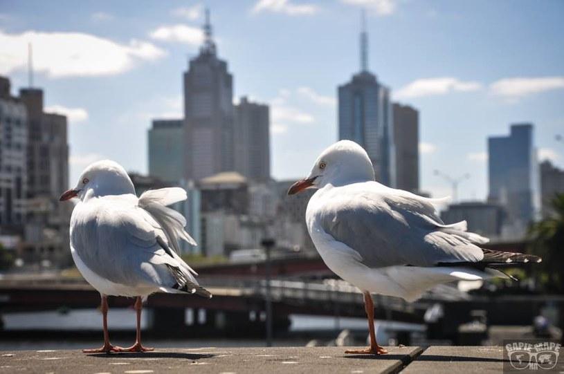Southbank Promenade, Melbourne /Informacja prasowa