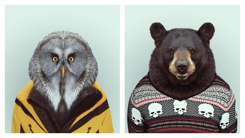 Sowa i niedźwiedź to jedni z bohaterów drugiej części naszego biurowego zwierzyńca /East News