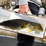 Spacer z rybami? Abstrakcyjny pomysł prosto z Japonii