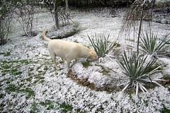 Spadł pierwszy śnieg! Oto zdjęcia od Was
