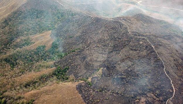 Spalony las w Amazonii /MATO GROSSO  /PAP/EPA